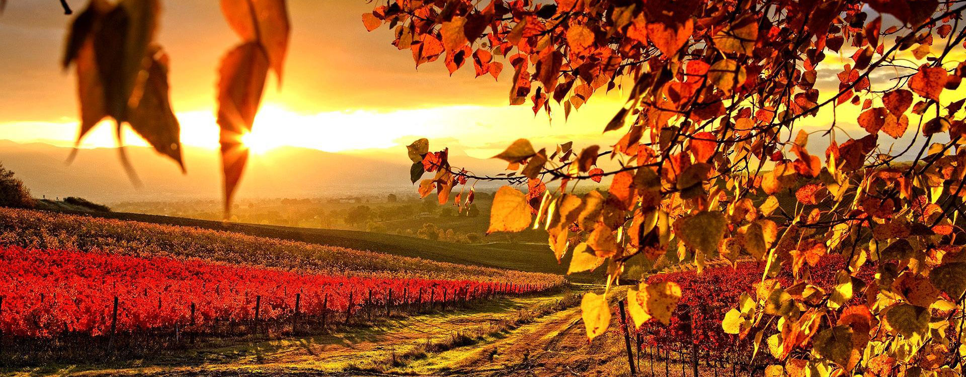 AUTUNNO IN SALUTE